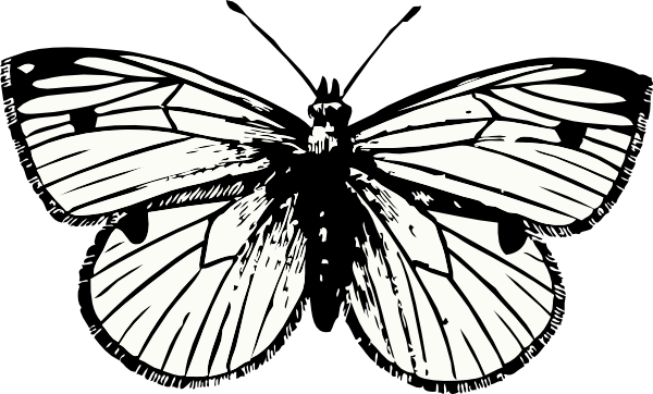 Moth svg #18, Download drawings