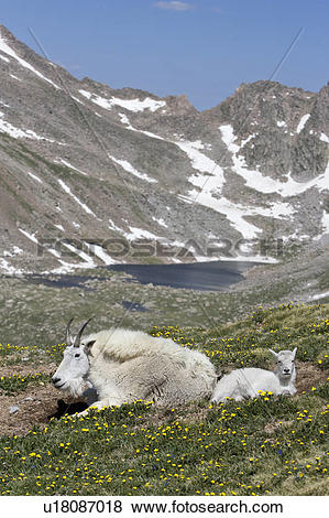 Mount Evans clipart #19, Download drawings