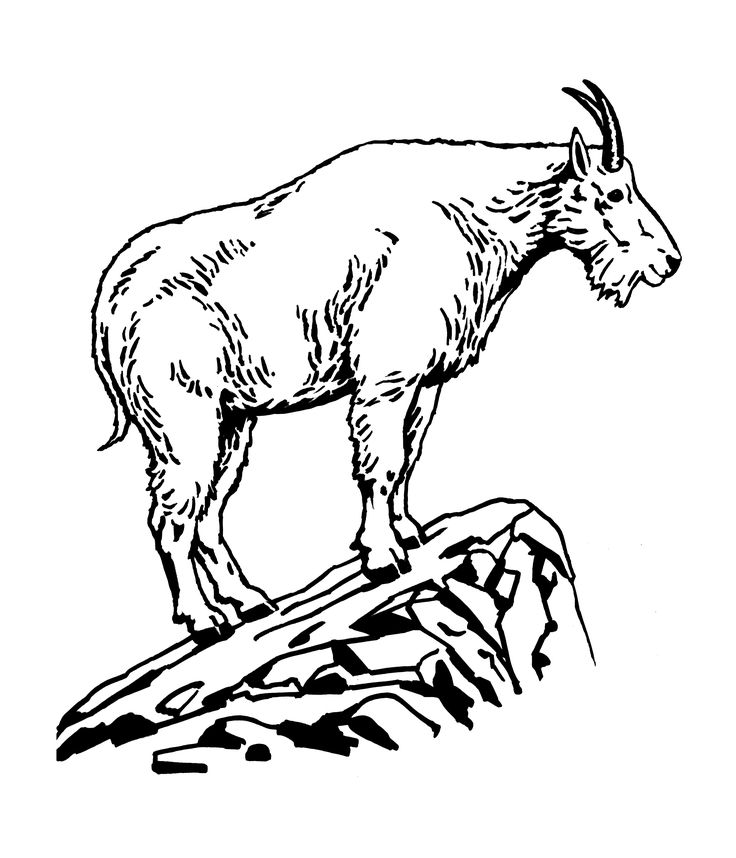 Mountain Goat clipart #11, Download drawings