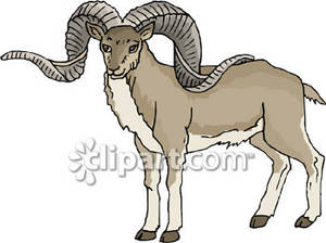 Mountain Goat clipart #14, Download drawings
