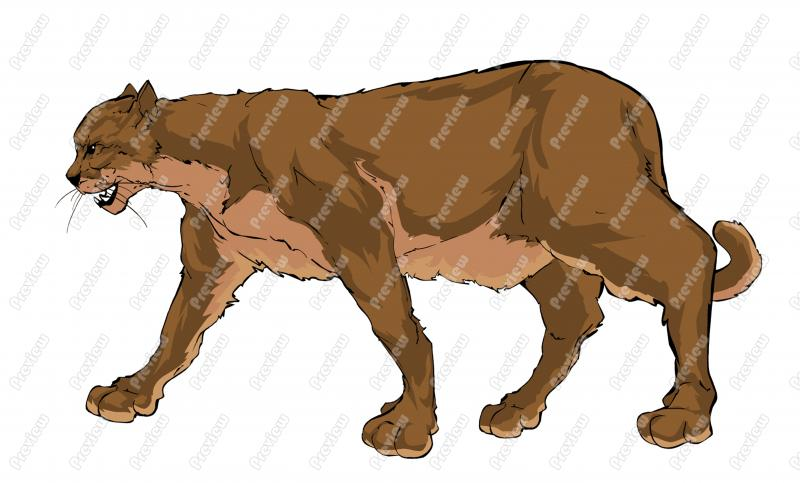 Mountain Lion clipart #3, Download drawings
