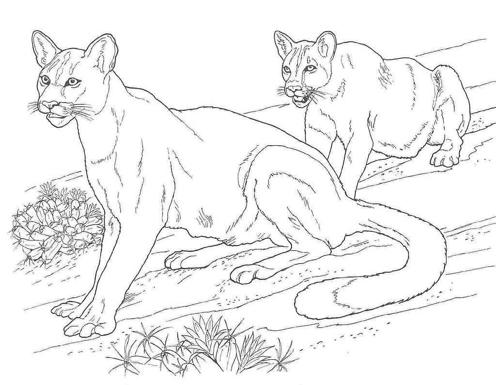 Puma coloring #6, Download drawings