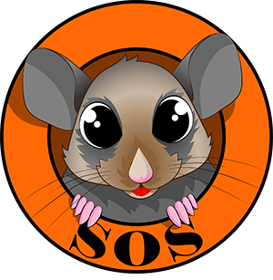 Mountain Pygmy Possum clipart #19, Download drawings