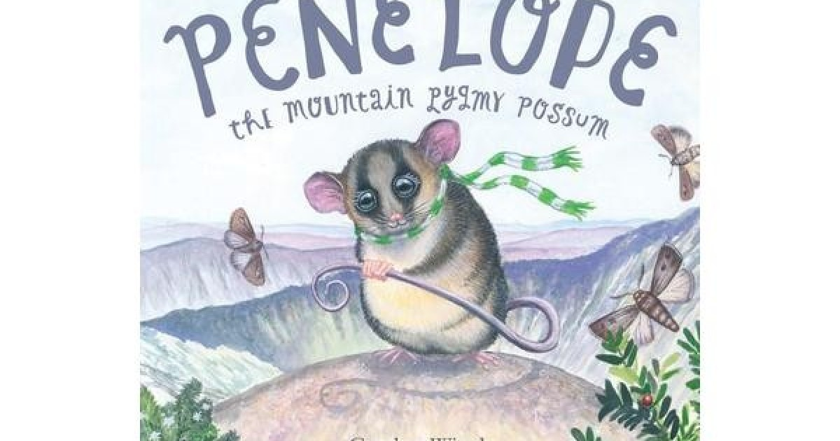 Mountain Pygmy Possum clipart #1, Download drawings