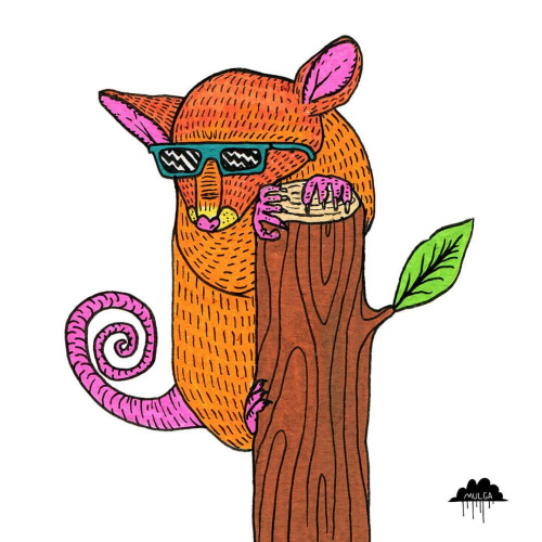 Mountain Pygmy Possum clipart #7, Download drawings