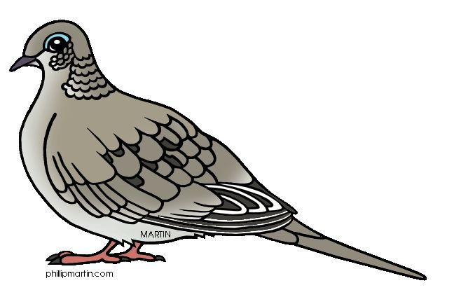 Mourning Dove clipart #13, Download drawings