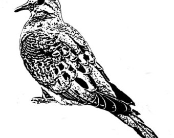 Mourning Dove clipart #1, Download drawings