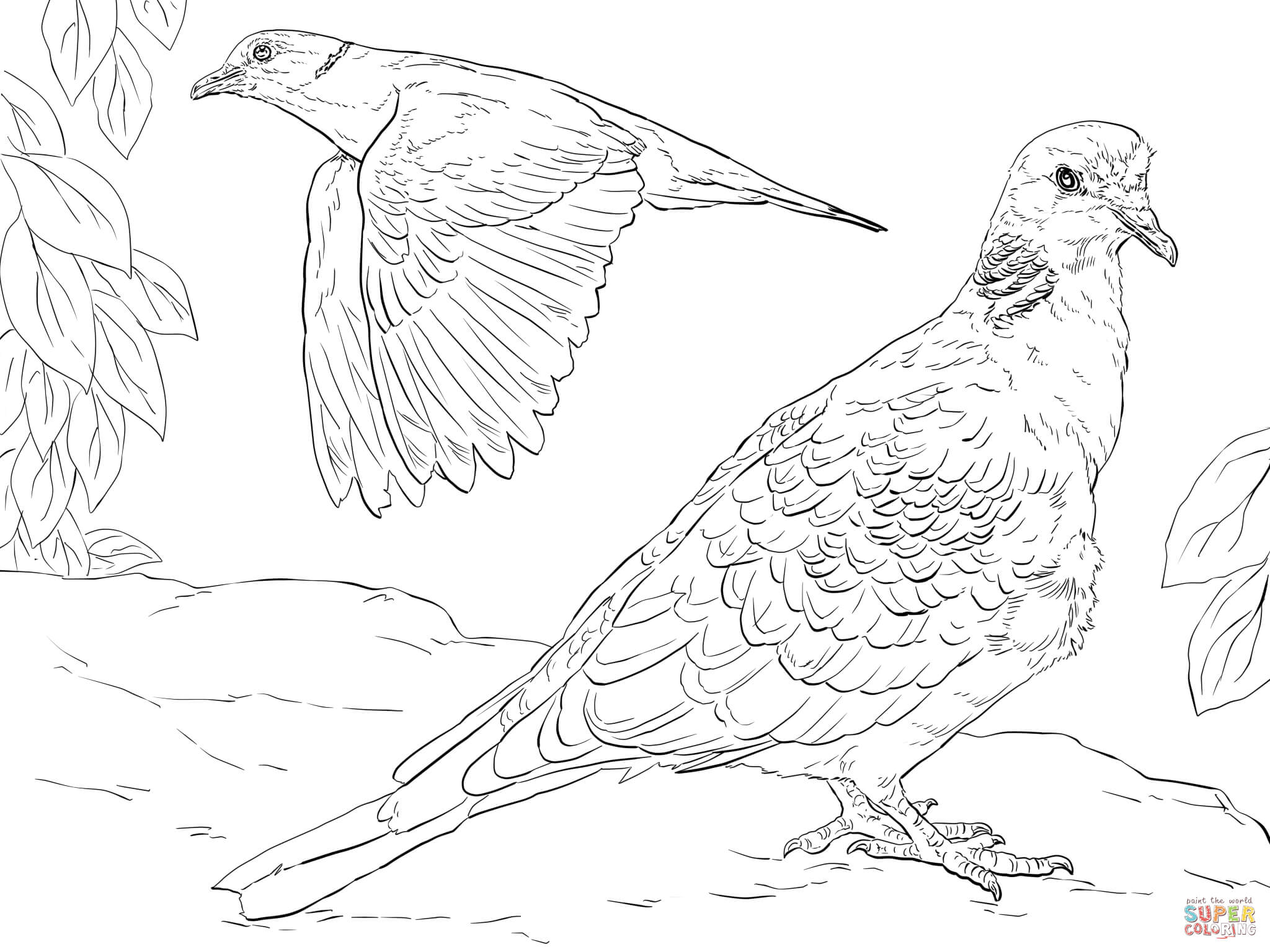 Turtle Dove coloring, Download Turtle Dove coloring for ...