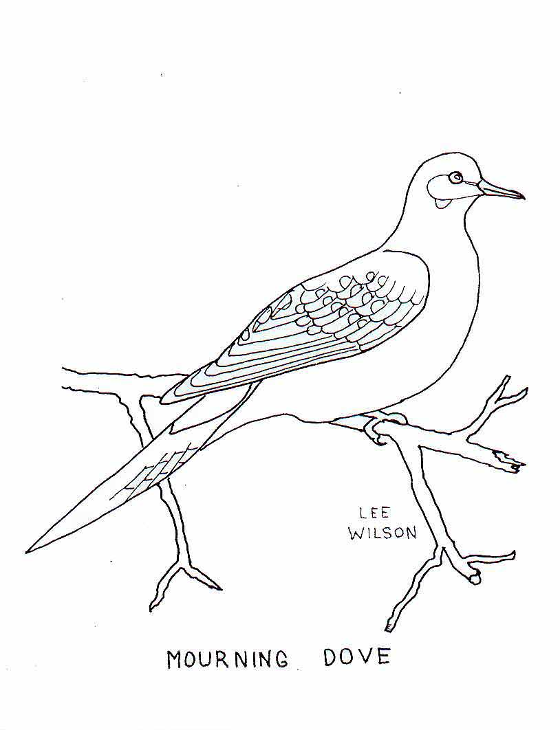 Turtle Dove coloring #5, Download drawings