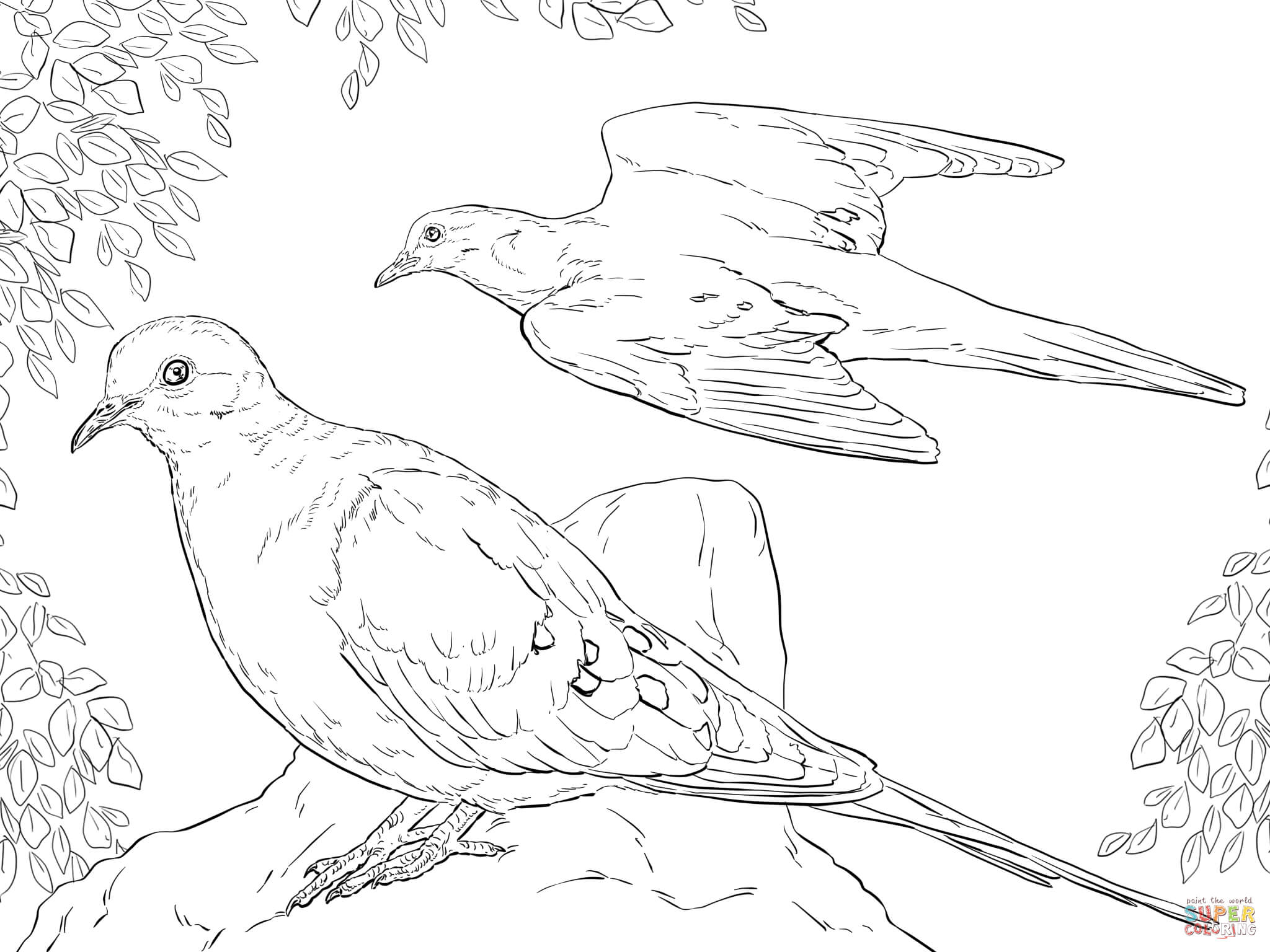 Turtle Dove coloring #18, Download drawings