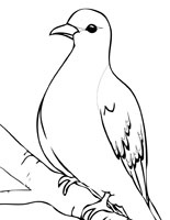 Turtle Dove coloring #4, Download drawings