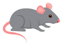 Mouse clipart #1, Download drawings
