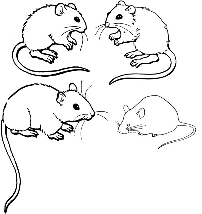 Rodent coloring #11, Download drawings