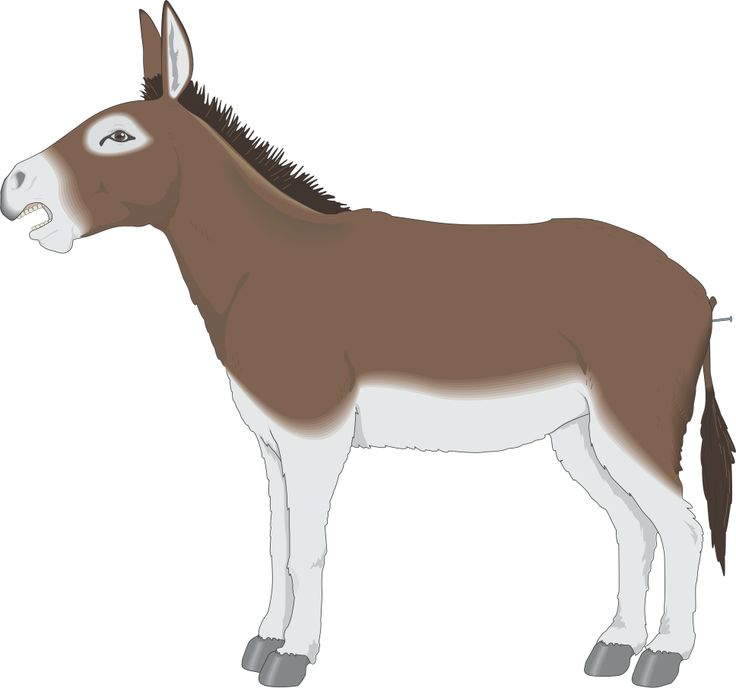 Mule clipart #17, Download drawings