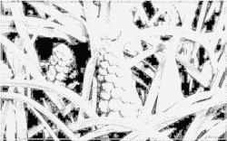 Muscari coloring #4, Download drawings