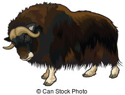 Muskox clipart #2, Download drawings
