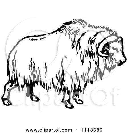 Muskox clipart #13, Download drawings