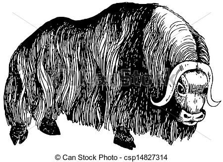 Muskox clipart #8, Download drawings