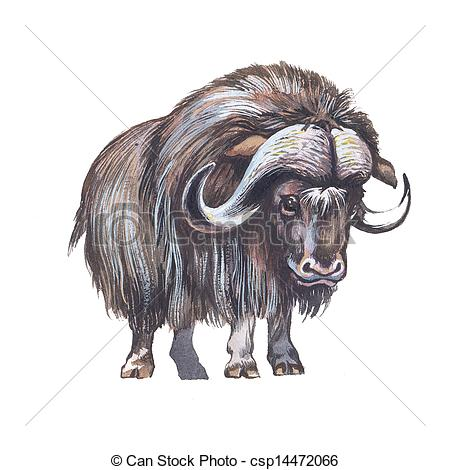Muskox clipart #7, Download drawings