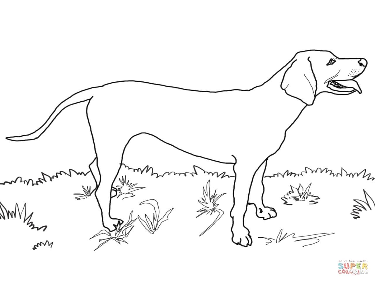 Muskox coloring #12, Download drawings