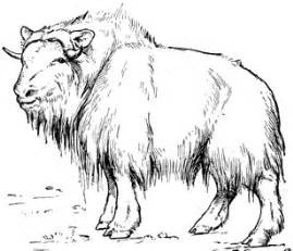 Muskox coloring #18, Download drawings