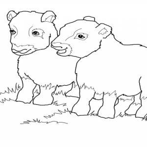 Muskox coloring #15, Download drawings
