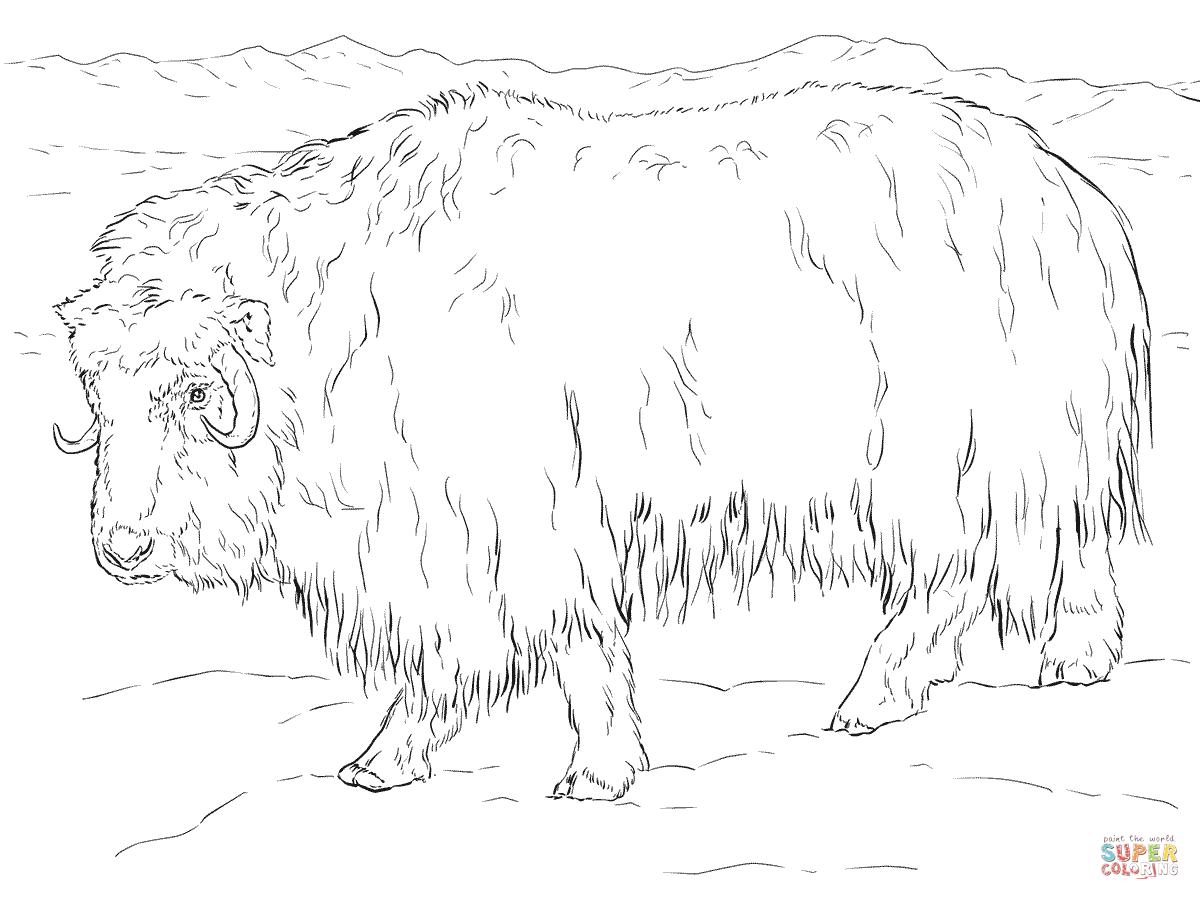 Muskox coloring #14, Download drawings