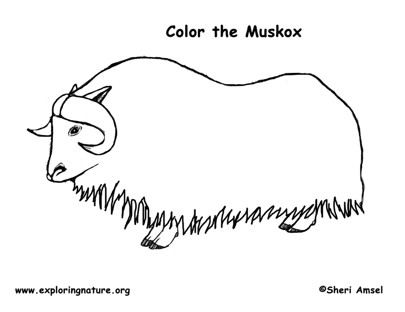 Muskox coloring #19, Download drawings
