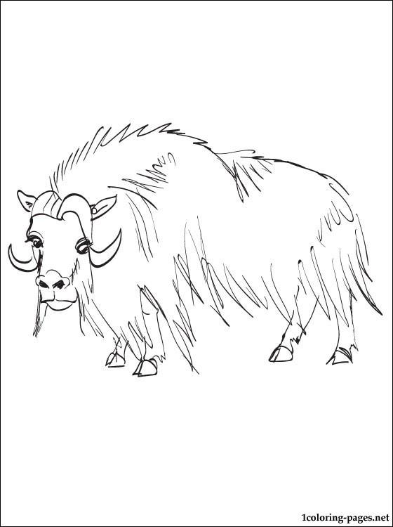 Muskox coloring #2, Download drawings