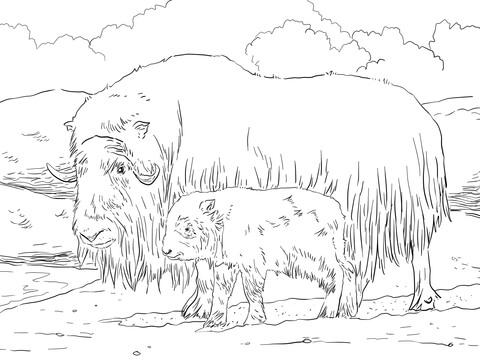 Muskox coloring #13, Download drawings