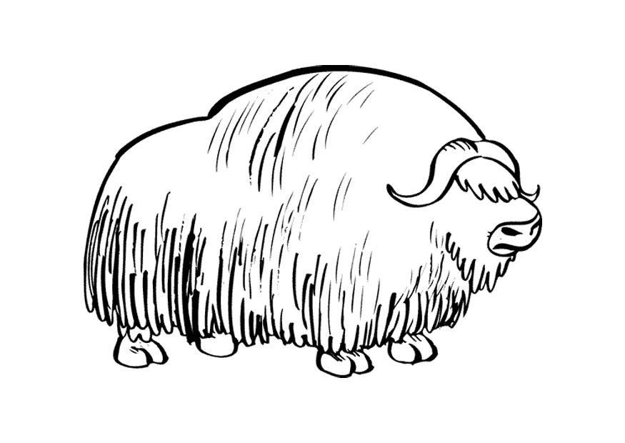 Muskox coloring #4, Download drawings