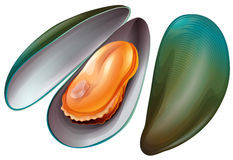 Mussel clipart #15, Download drawings