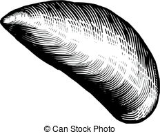 Mussel clipart #5, Download drawings