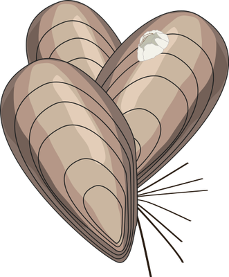 Mollusc svg #4, Download drawings