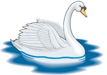 Mute Swan clipart #11, Download drawings