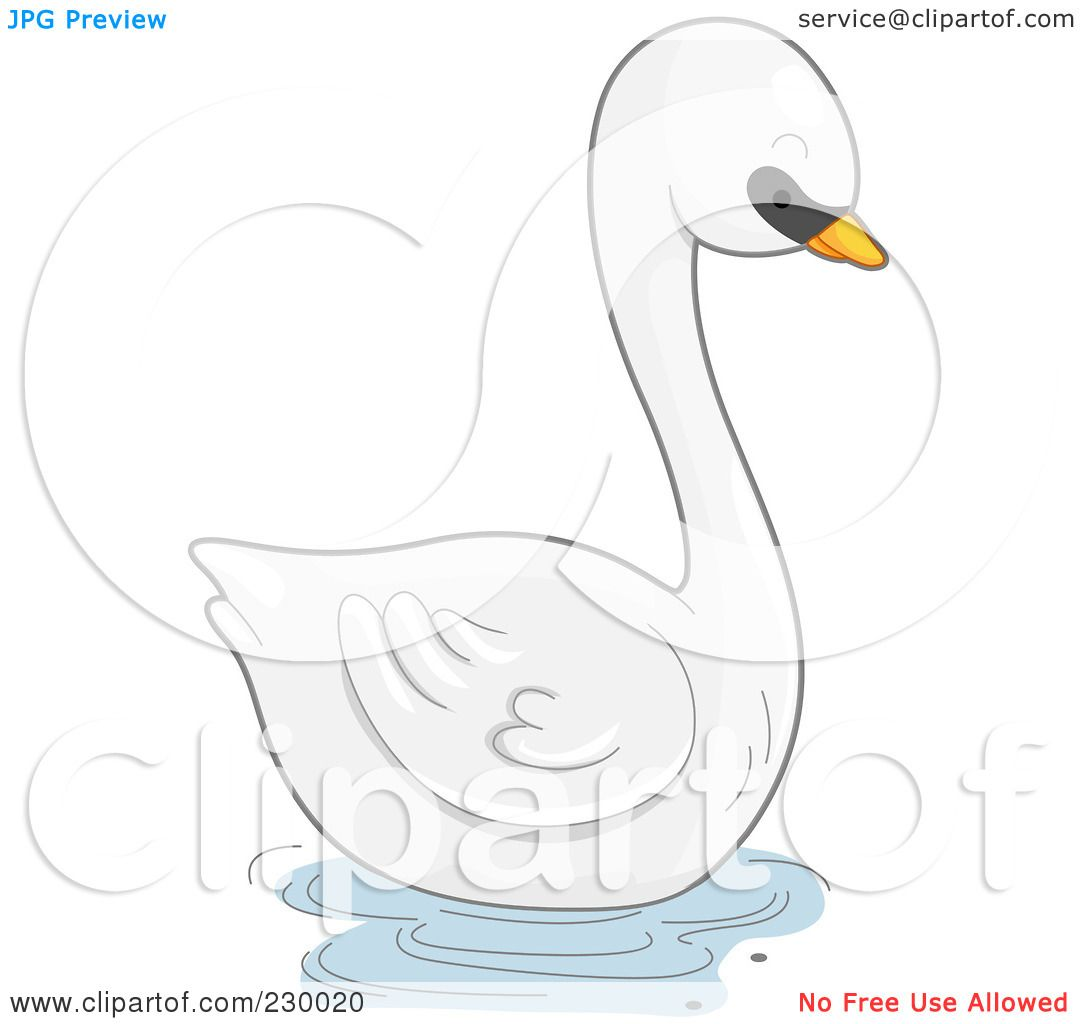 Mute Swan clipart #14, Download drawings