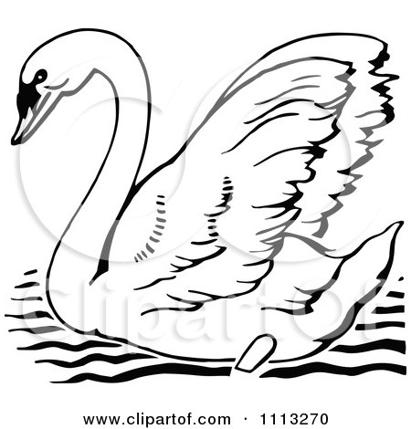 Mute Swan clipart #5, Download drawings