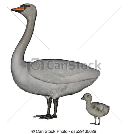 Mute Swan clipart #1, Download drawings