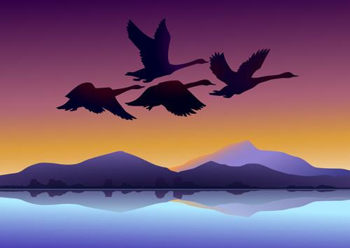 Mute Swan svg #9, Download drawings