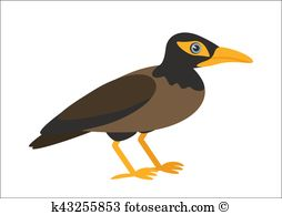 Myna clipart #8, Download drawings