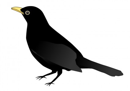 Myna clipart #9, Download drawings