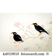 Myna clipart #14, Download drawings