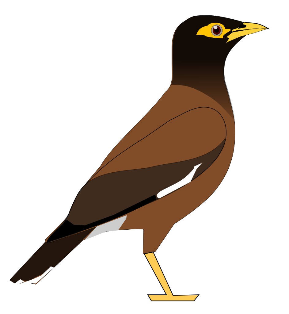Myna clipart #18, Download drawings