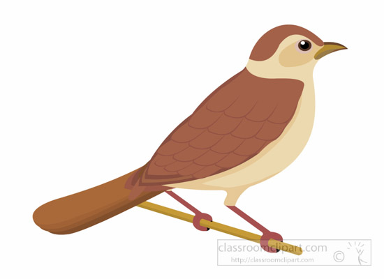 Myna clipart #5, Download drawings