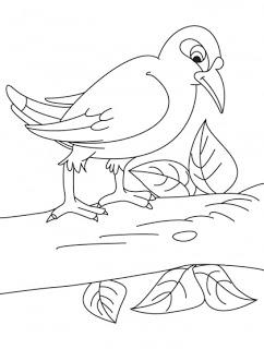 Myna coloring #17, Download drawings