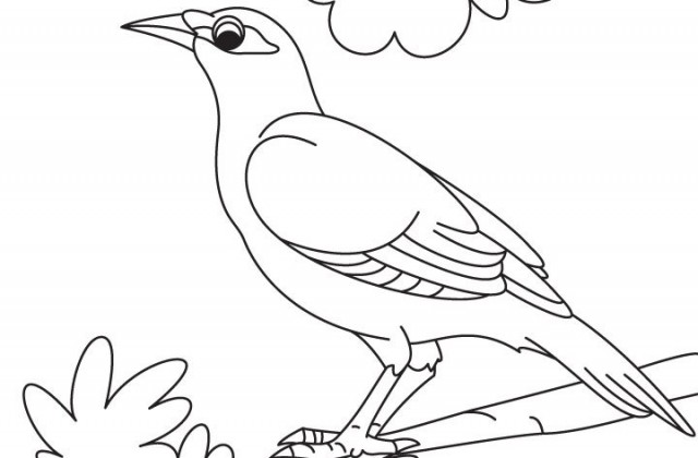 Myna coloring #2, Download drawings