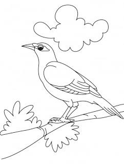 Myna coloring #18, Download drawings