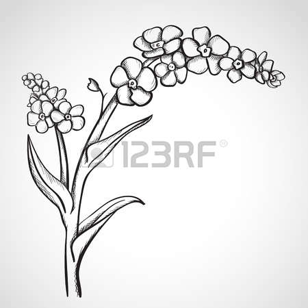 Myosotis clipart #3, Download drawings