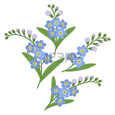 Myosotis clipart #19, Download drawings