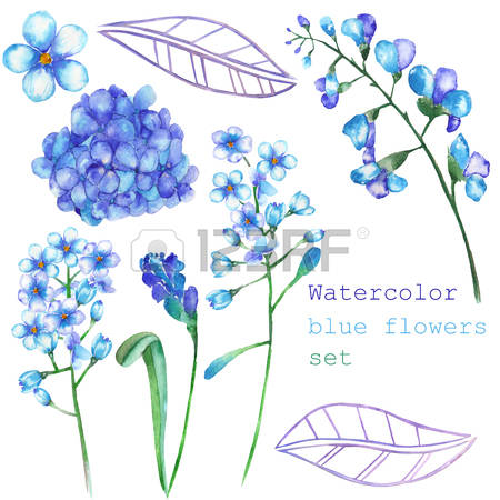 Myosotis clipart #13, Download drawings